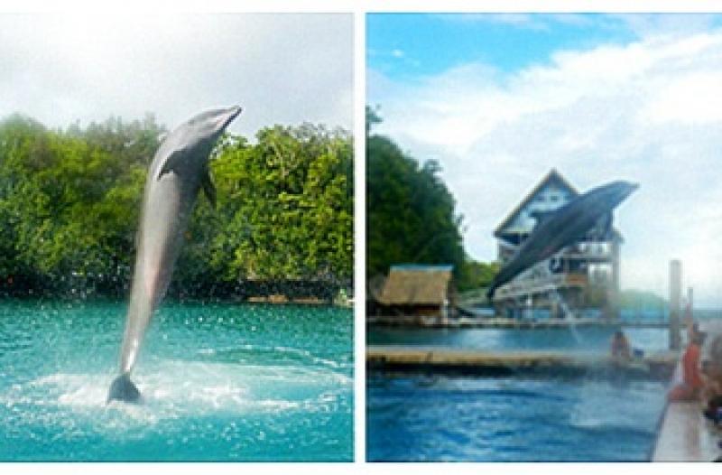 太平洋海豚湾